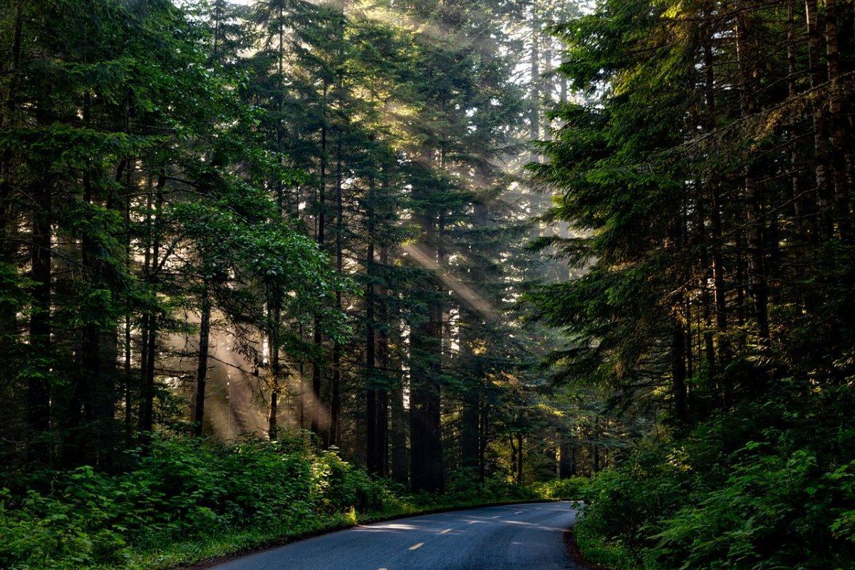 Běhejte ve stínu lesa